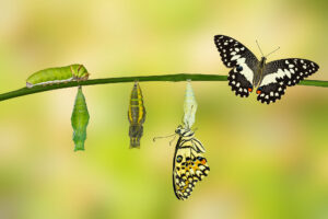 Imago Transformation - von der Raupe zum Schmetterling